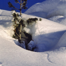 Neve - Image #026 - 2004