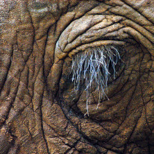Earth - Image #015 - Kenya - 2006