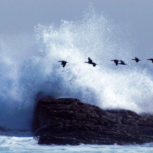 """""""Wave in Cape Point #02"""" - South Arfica - 2006"""