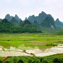 """Rice Field"" - China - 2014"